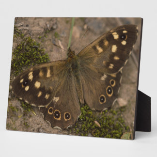 Speckled Wood Butterfly Plaque