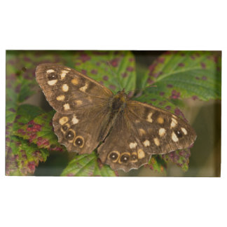 Speckled Wood Butterfly Table Number Holder