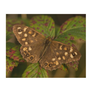 Speckled Wood Butterfly Wood Print
