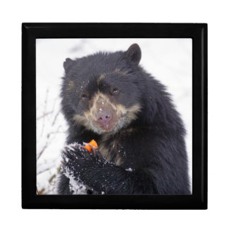 Spectacled bear gift box
