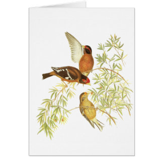 Spectacled Finch Card