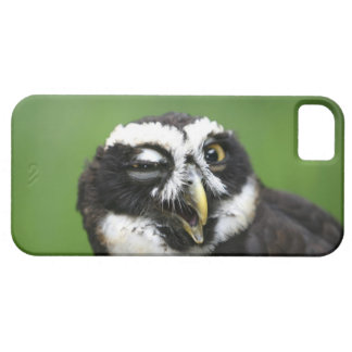 Spectacled Owl (Pulsatrix perspicillata) iPhone 5 Covers