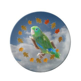 Spectacled Parrotlet Plate