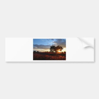 Spectacular African Sunset Bumper Sticker