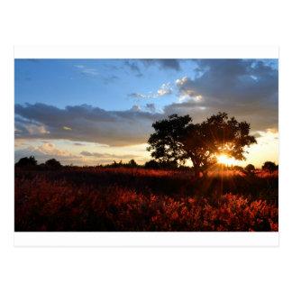 Spectacular African Sunset Postcard