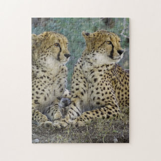 Spectacular Cheetah Jigsaw Puzzle
