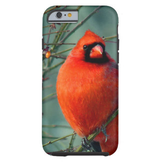 Spectacular Red Male Cardinal Tough iPhone 6 Case