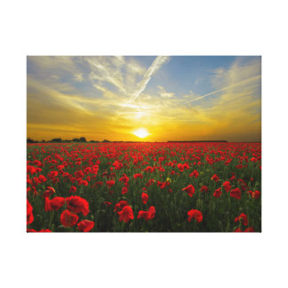 spectacular red poppies canvas print