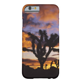 Spectacular Sunrise at Joshua Tree National Park Barely There iPhone 6 Case