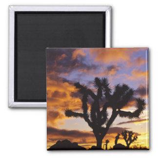 Spectacular Sunrise at Joshua Tree National Park Square Magnet