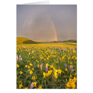 Spectacular wildflower meadow at sunrise in 2 greeting card