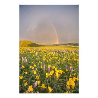 Spectacular wildflower meadow at sunrise in 2 art photo