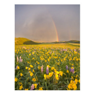 Spectacular wildflower meadow at sunrise in 2 postcard