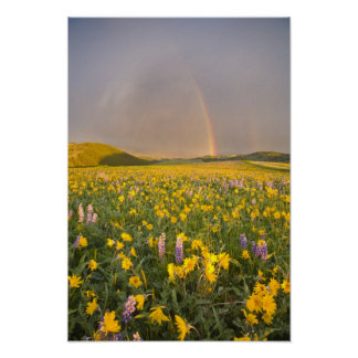 Spectacular wildflower meadow at sunrise in 2 poster