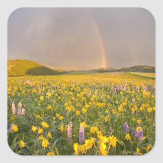 Spectacular wildflower meadow at sunrise in 2 square sticker