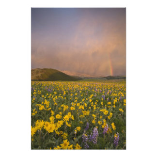 Spectacular wildflower meadow at sunrise in photograph