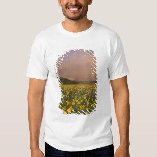 Spectacular wildflower meadow at sunrise in tees