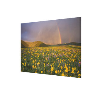 Spectacular wildflower meadow at sunrise in the 2 gallery wrapped canvas