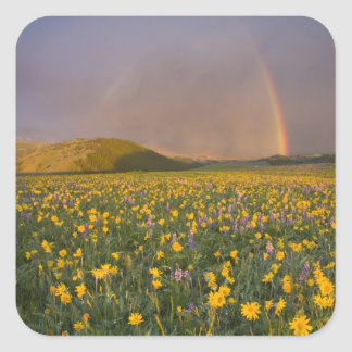 Spectacular wildflower meadow at sunrise in the 2 square sticker
