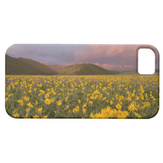 Spectacular wildflower meadow at sunrise in the iPhone 5 cover