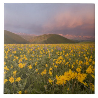 Spectacular wildflower meadow at sunrise in the large square tile