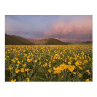 Spectacular wildflower meadow at sunrise in the postcard