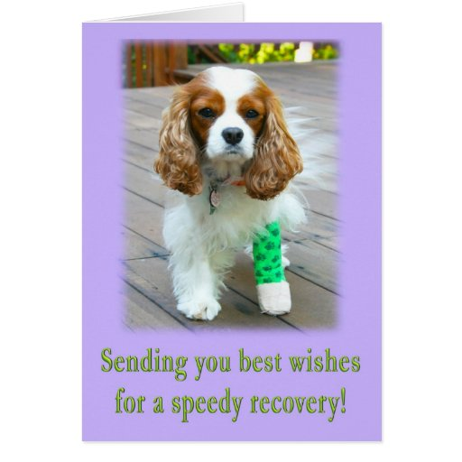 Speedy Recovery Get Well Spaniel Card