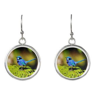 Spendid Fairy Wren Australia Earrings