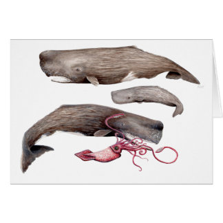 Sperm whale trio card
