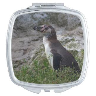 Spheniscus humboldti compact mirrors