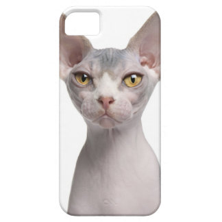 Sphynx (7 months old) iPhone 5 case