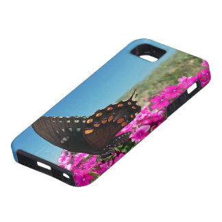 Spicebush Swallowtail Butterfly iPhone 5 Cover
