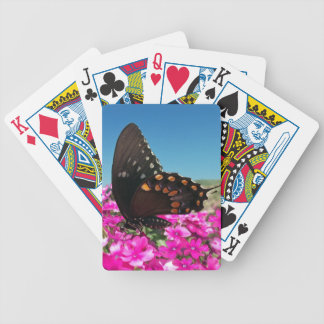 Spicebush Swallowtail Butterfly Card Decks