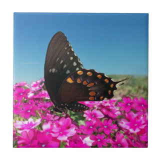 Spicebush Swallowtail Butterfly Small Square Tile