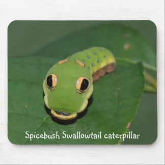 Spicebush Swallowtail caterpillar Mouse Pad