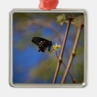 Spicebush Swallowtail I Metal Ornament