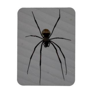 """Spider 3""""x4"""" Magnet"""