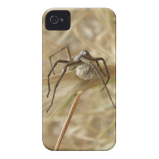 Spider and Egg Sac Blackberry Curve Case Case-Mate iPhone 4 Cases