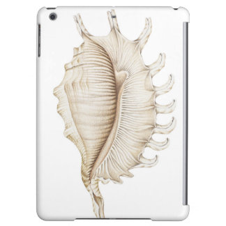 Spider Conch Shell in Colour Pencil iPad Air Case