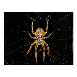 Spider design postcard