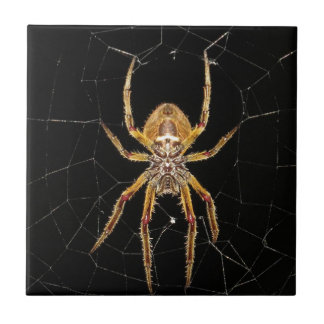 Spider design tile