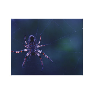 Spider in the Web Gallery Wrapped Canvas