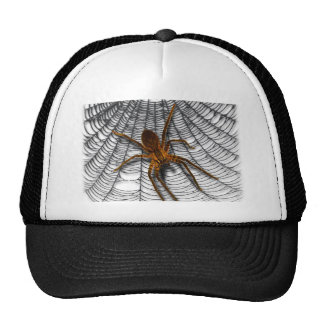 spider in web cap