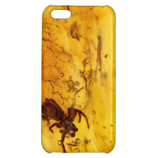 Spider inside baltic amber stone iPhone 5C cover