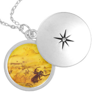 Spider inside baltic amber stone locket necklace