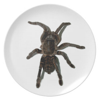 Spider lovers plate