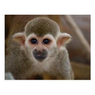 Spider monkey postcard