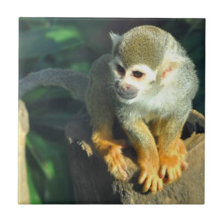 Spider Monkey Tile
