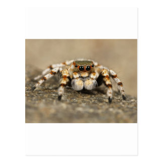 Spider Nature Animals  Wild  insects Postcard