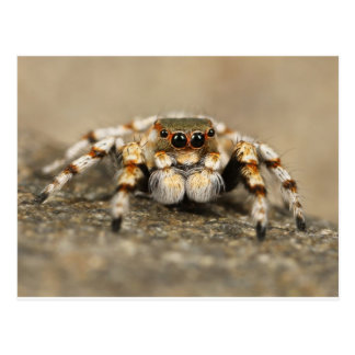 Spider Nature Animals  Wild  insects Post Card